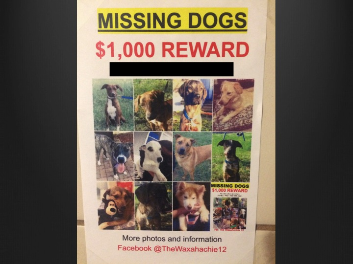 missing dogs no phone